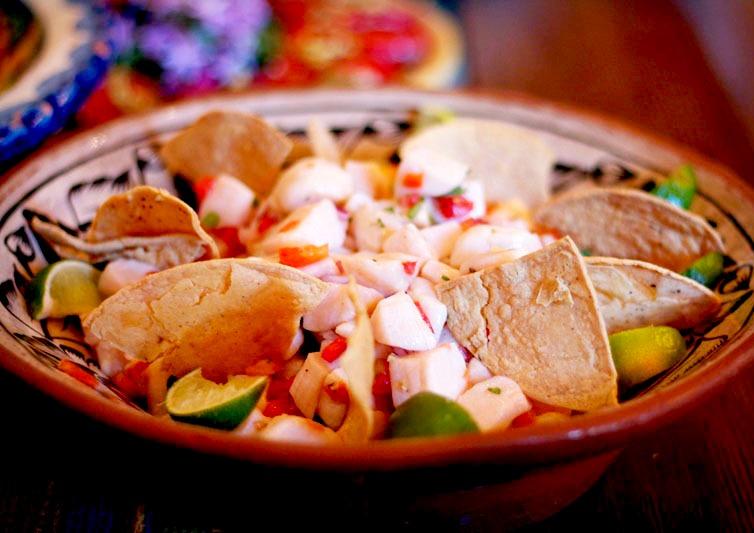 scallop civiche