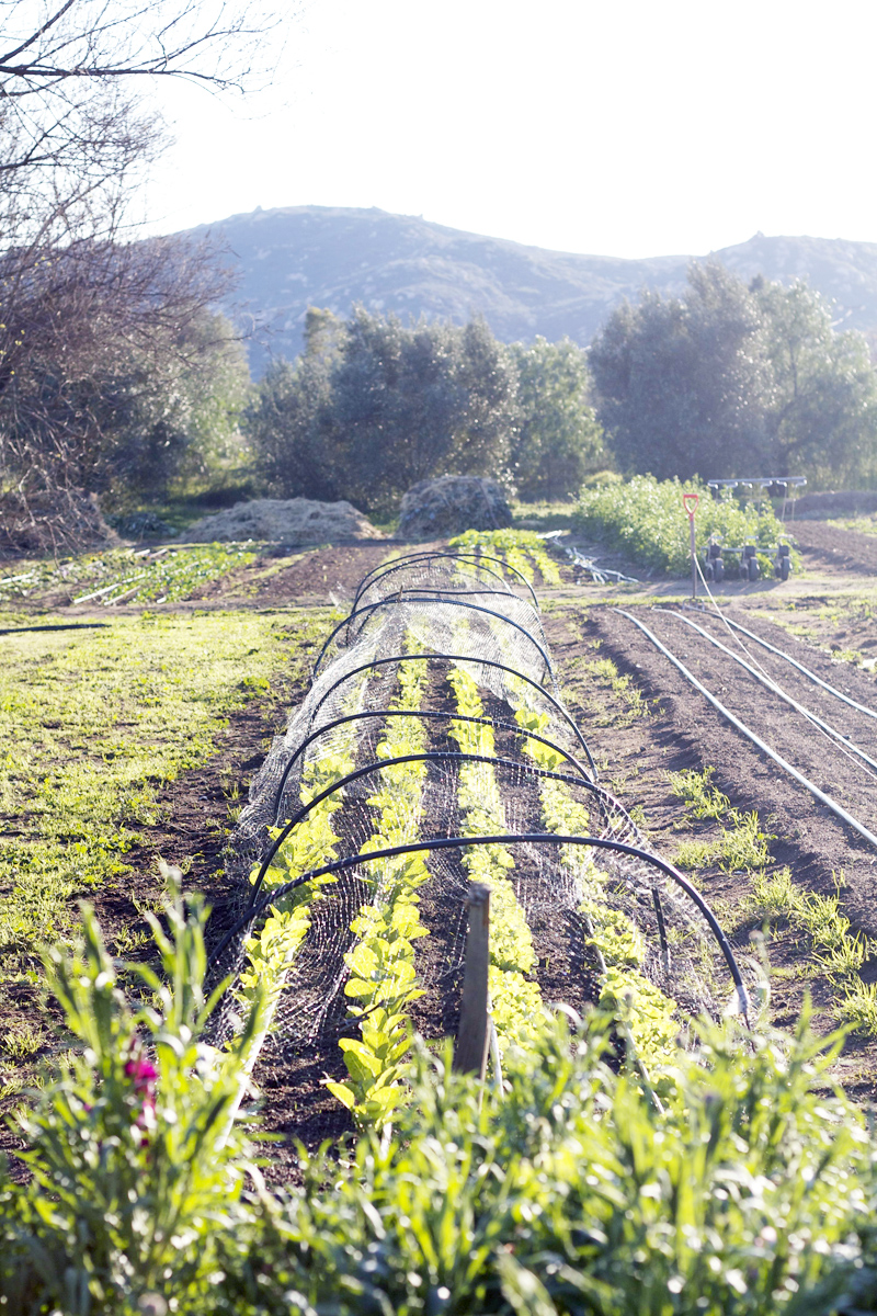 Cooking school and organic farm 5