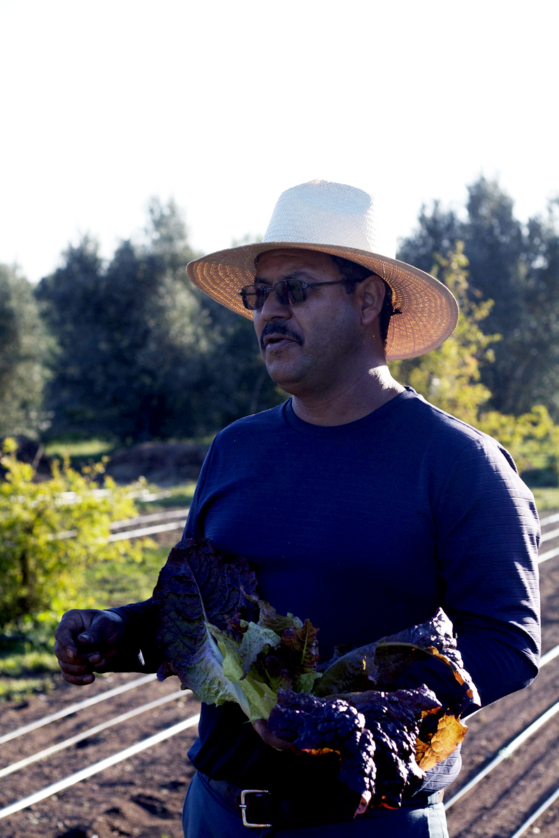 Cooking school and organic farm 8