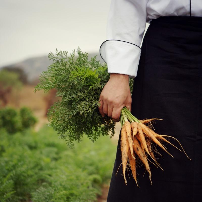 carrots_in_garden
