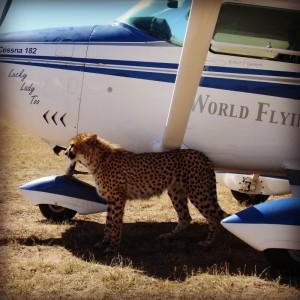 Bob-Cheetah