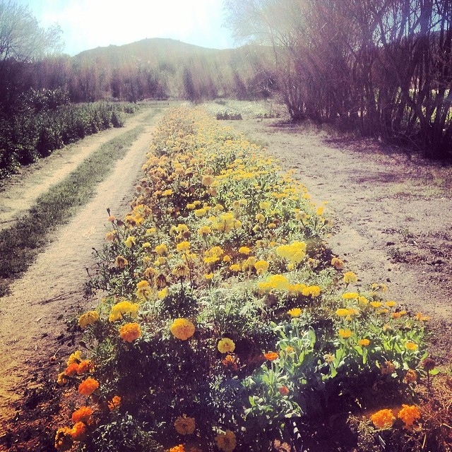 A Day on Our Organic Farm