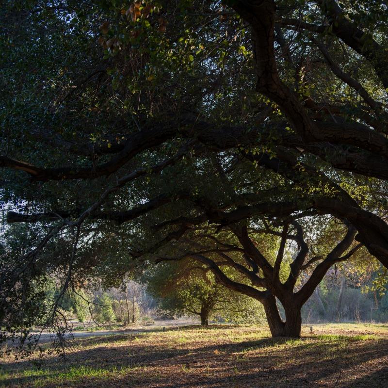 Origins of the Ranch, Part XVI