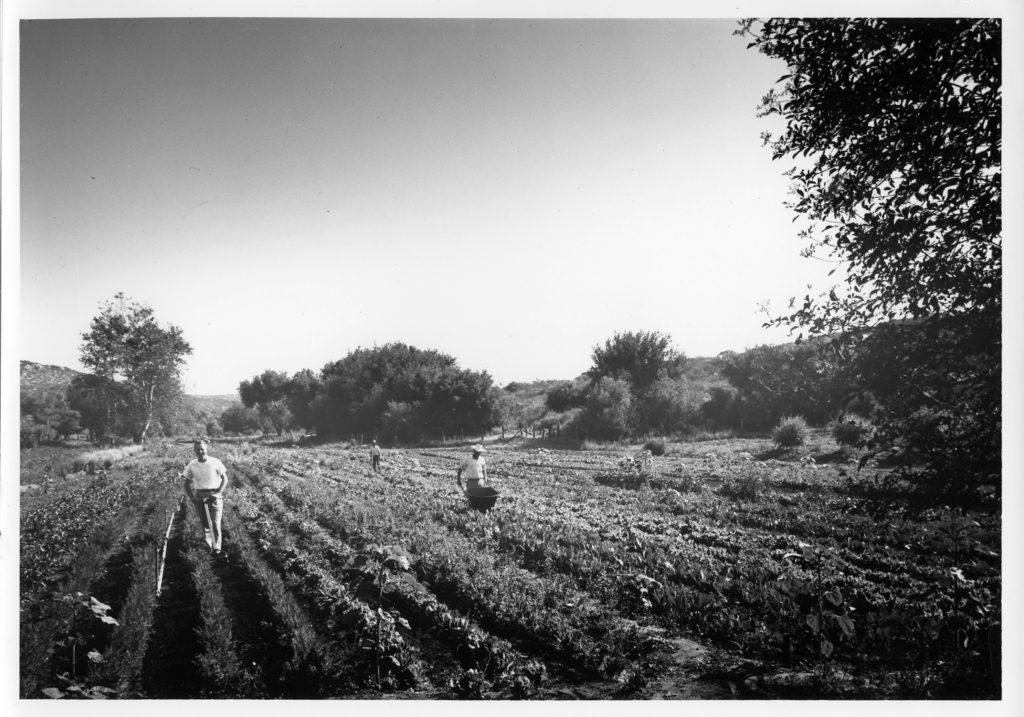 Origins of the Ranch, Part XVIII