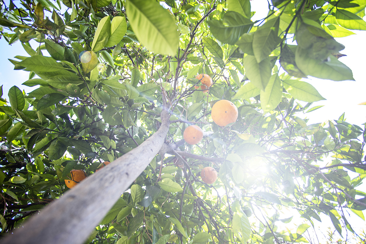 quit sugar don't fear fruit